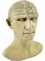 Brand New Creepy Cast Resin Phrenology Head Victorian Steampunk