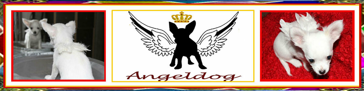 AngelDog Factory