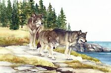 Three Wolves on Scoville Point Isle Royale National Park Watercolor Reproduction