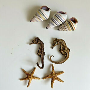 Dried Star Fish Curled Tail Candy Cane Snail Shell Ocean Specimen Lot Animal