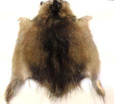 Select Tanned Prime Winter Muskrat pelt,code:premomus1 hide, fur seller