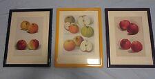 """3 schöne Bilderrahmen, versch.Farben. mit Kunstblatt , """"Äpfel"""" in Passepartout,"""