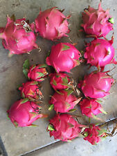 Dragon Fruit - American Beauty, Bruni, Halley's Comet, Vietnamese White