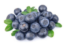 50Pcs Blueberry Tree Seed Fruit Blueberry Seeds Home Potted Bonsai Plant PT79