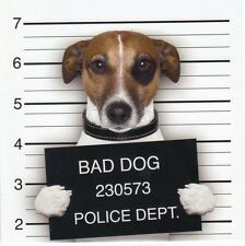 Pliante carte de luxe: Jack russel terrier Chico comme Gangster