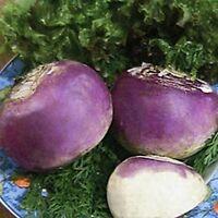 Rutabaga- Laurentain- 200 Seeds- BOGO 50% off SALE
