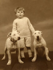 BULL TERRIER CHARMING DOG GREETINGS NOTE CARD SMALL CHILD WITH TWO DOGS