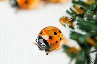 NEW Transparent Orange Glass Ladybird Ladybug Little Small Gloss Garden Ornament