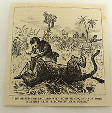 small 1878 magazine engraving ~ Man Holds Leopard Down