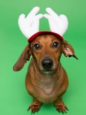 Dog Christmas Hat - Dog & Cat Costume - Christmas Reindeer Hat - Antlers- Handma