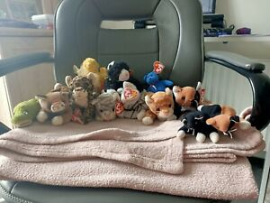 TY Beanie Babies Cat Bundle - See Description For All