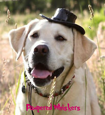 """Buckaroo Black Cowboy Hat for large dogs (16-24""""  collar size)"""