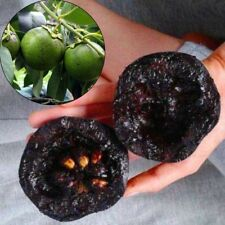 10PCS Rare Diospyros Digyna Black Sapote Persimmon Chocolate Pudding Fruit Seeds
