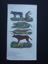 GALAGO, OTTER, RED WOLF ORIGINAL 1837 HAND COLORED COPPER PLATE ENGRAVING
