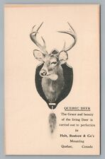 """""""Quebec Deer...Grace & Beauty"""" Taxidermy Advertising—QC City RARE Antique 1910s"""
