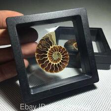 Natural Ammonite Fossil Specimen conch quartz Crystal Shell Healing+Gift box