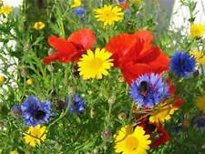 Wildflower Seed Mix , 2 ounces , Great for Colorful Borders and Gardens.