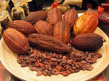 New 8-Cocoa-Seeds-Cacao-Seeds-Chocolate-Nut-Tree-Theobroma-cacao-L-Free-Ship
