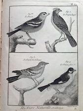 DIE PRISE CRESTED ARDENNEN Benard 1790 HISTOIRE NATURELLE Ornithologie Vögel