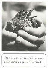 Carte Postale Ancienne  Oiseaux Houtland  Un Oiseau dans la Main d'un Homme...