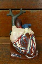 Rare Vintage Life Like Histoslide Medical Educational Anatomical Heart Model