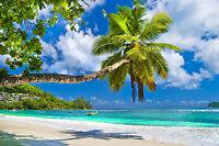VLIES Fototapete-PALM BEACH-(19V)-350x260cm-7Bahnen-Kleister-Palmen Strand Sonne