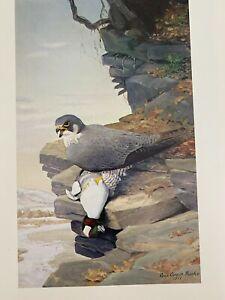"Louis Agassiz Fuertes & The Singular Beauty of Birds, ""Peregrine Falcon"" Print"