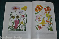 1927 magazine articles  FLOWERS, Wild flowers of the West, Edith S. Clements art