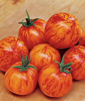 Red Zebra Cherry Tomato Seeds! OVER 200 KINDS OF TOMATOES IN OUR STORE! COMB S/H