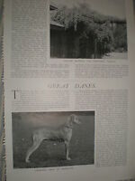 Photo article Great Dane dogs 1906 ref Y3