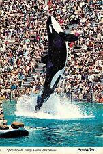 Killer Whale Sea World San Diego CA Aurora OH Orlando FL Postcard