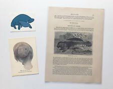 *Lot of Three* Vintage Manatee Collectibles — c.1885 Book Plate, Postcard, Decal