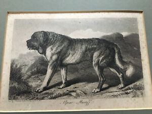 Alpine Mastiff Thomas Landseer Antique Print c1850 Art Artist Vintage Retro Dog