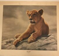 "Charles Frace Lion Cub Signed/ 21 1/2""x18 1/2"""