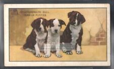 Staffordshire Bull Terrier Puppies Dog 75+ Y/O Ad Trade Card