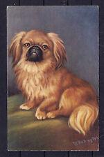 Circa 1940 - 1950 Babington Dog Art Postcard PEKINGESE TIBETAN SPANIEL TYPE Used