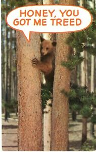 OLD POST CARD HUMOROUS CARD HONEY, YOU GOT ME TREED IN MINNESOTA