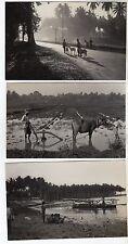 7 x Indonesia Real Photo Postcards c1930 / Ethnic
