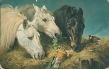 Horses eating hay birds Misch and co
