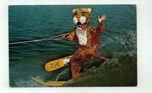 "FL Cypress Gardens Florida vintage post card - ""Timmy the Tiger"""