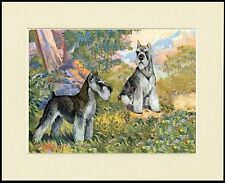 MINIATURE SCHNAUZER DOGS LOVELY DOG PRINT MOUNTED READY TO FRAME