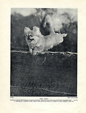 PEKINGESE AGILE NAMED DOG JUMPING TENNIS NET OLD ORIGINAL 1934 DOG PRINT