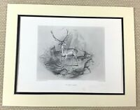 Edwin Landseer Antique Engraving Print Scottish Painting The Glen Deer Stag 1880