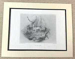 Edwin Landseer Antique Engraving Print Scottish Painting The Glen Deer Stag 1880