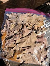 New listing 1 Gallon Bag Oak Leaf Litter Dart Frog Reptile Isopod Terrarium Leaves
