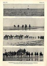 Ein Pferderennen auf dem Meeresgrund Dunenwatten bei Kuxhaven / Cuxhaven 1902