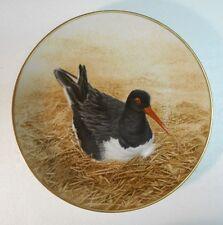 Collector Water Bird Plate Eric Tenney Oyster-Catcher 24K gold rim Porcelain