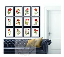 Red Poppies Wall Art Botanical prints set of 12 Unframed Remembrance Day Decor