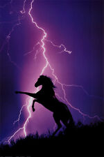 Lightning and Silhouette of Horse Poster Print, 24x36