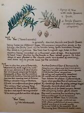 Edith Holden The Yew Tree by William Wordsworth Calligraphy and Botanical Print